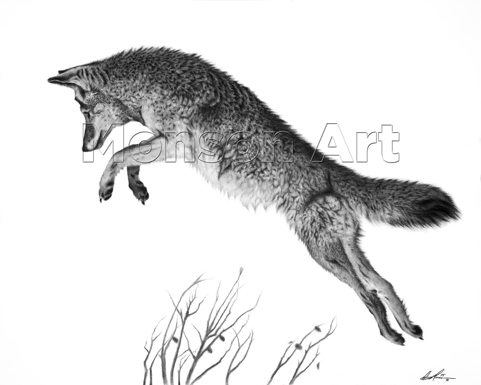 Monson190506-02 Hunting Coyote 40×32