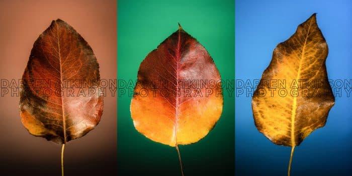 Leaf Set Color