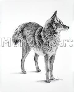 Monson190807-01 Coyote Courtship 1 32×40
